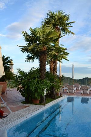 Hotel Madrigale: Smukke palmer omkring pool områderne