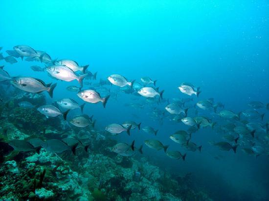 Simply Carriacou Island Tours : A school of fish