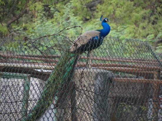 Hotels Near Deer Park Delhi