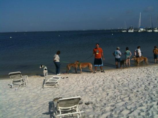 Quality Inn and Suites : Hounds at the private beach.
