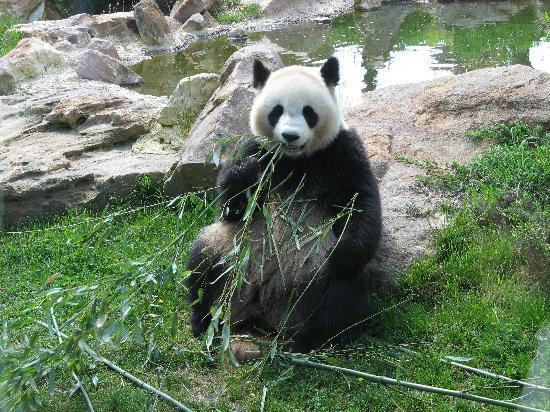ZooParc de Beauval: Miam !