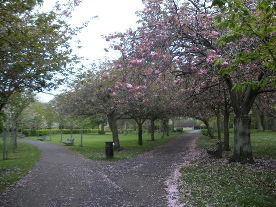 Oaklodge Bed & Breakfast: neighborhood park