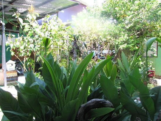 Veronica's Place Cabinas: le jardin devant la chambre
