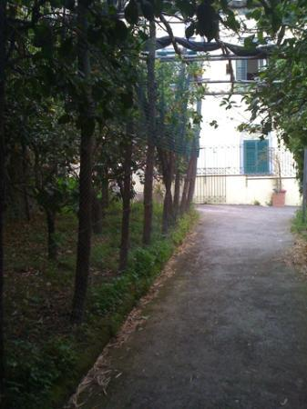 Villa Romita: Lemon trees and path to village.