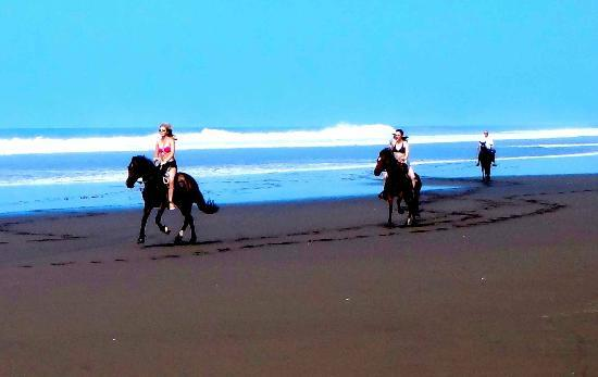 Barking Horse Farm: Finally at the Beach!!!