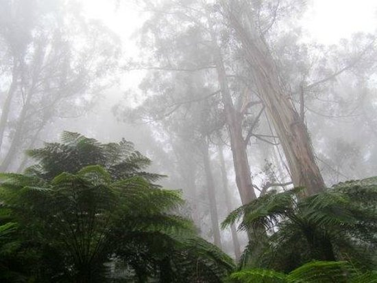 Dandenong, Australia: beautiful trees