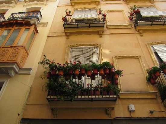 Casco Antiguo: geraniums