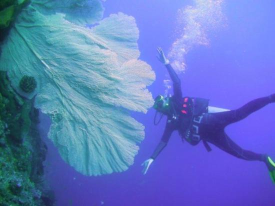 Tanta Moon Luxury Villas: diving