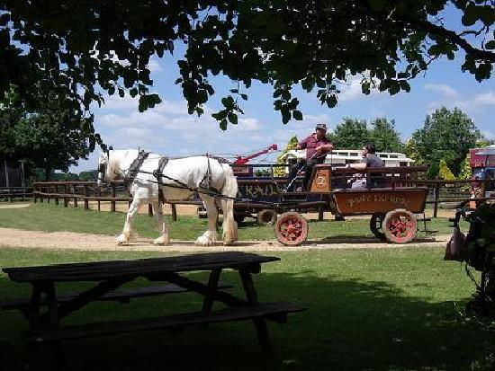 Verwood, UK: Wagon Rides around the park