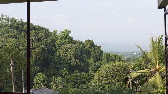 Nature Walk Resort: Vue du balcon en façade.