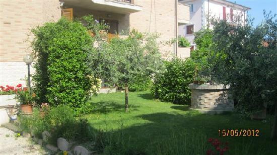 La Tartaruga B&B: giardino con arco e olivi