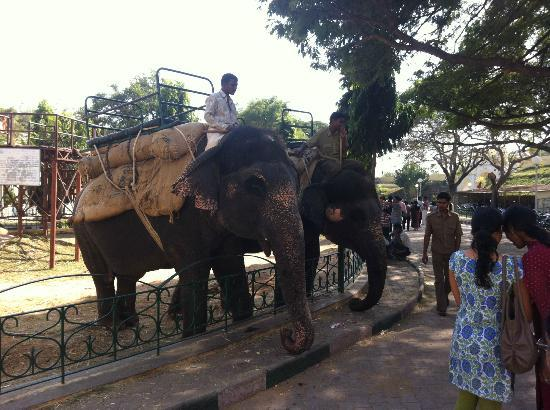 Παλάτι του Μαχαραγιά της Μαϊσόρ (Amba Vilas): Elephant rides