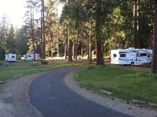 Wawona Campground: View of Loop A