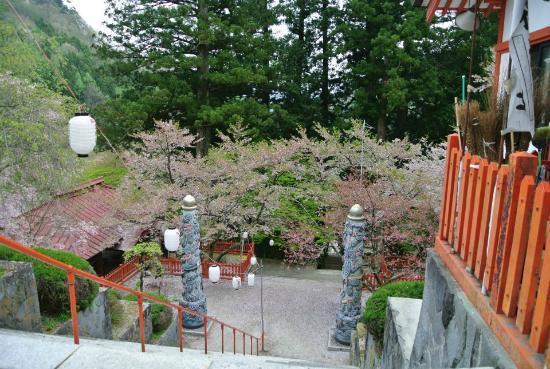 Kanazakura Shrine : 石段を見下ろしたところ