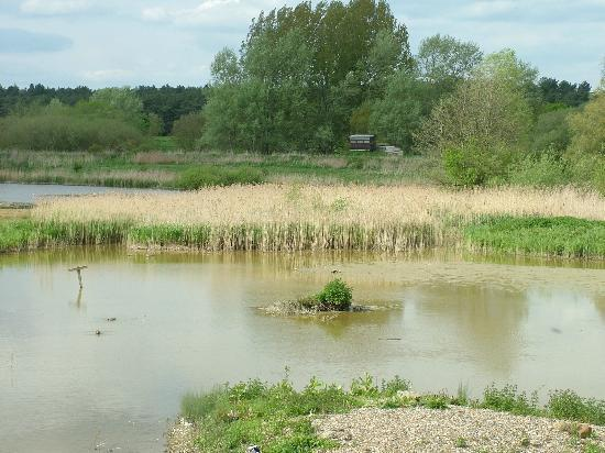Lackford Lakes: Some of the lakey bits.