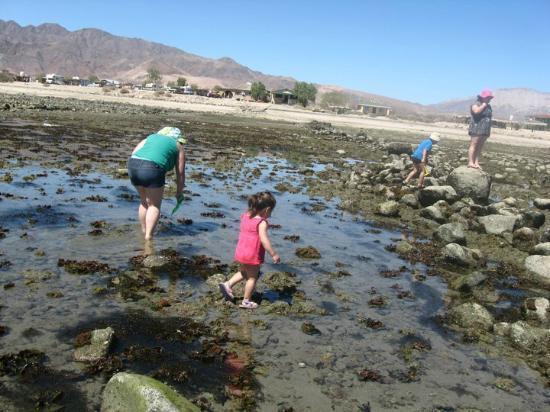 Bahia de Los Angeles, México: Buscando Ostras
