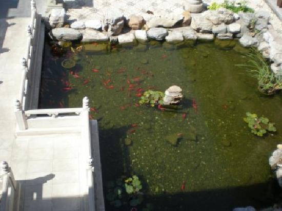 Han's Royal Garden Hotel: Glücksfische
