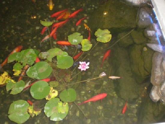 Han's Royal Garden Hotel: Sie lieben es, wenn man sie füttert