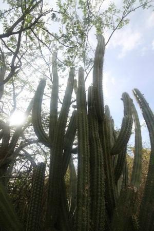 Ayo and Casibari Rock Formations: Cacti