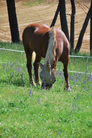 Hotel de la Ferme Lamy: Horse