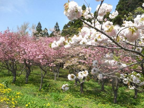 Matsumae Park: 見本園