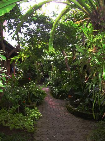 Nirvana Pension: Hotel garden