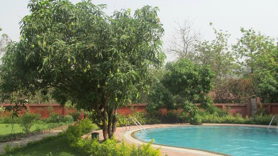 Leisure Vacations Myrica Resort: MANGOS ON THE HOTEL GROUNDS