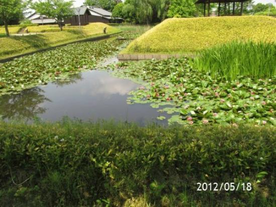 Nanbata Castle Park: 2012/05/18