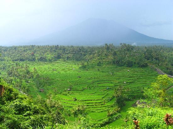 Μπαλί, Ινδονησία: Some landcapes in Bali are just stunning.... Rice fields and an inactive volcano in the backgrou