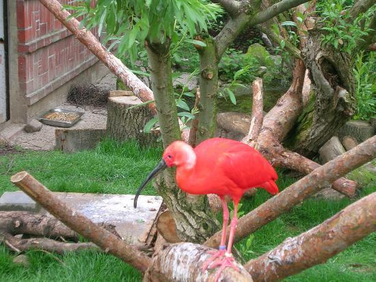 Zoologischer Garten Leipzig: ein schöner Vogel