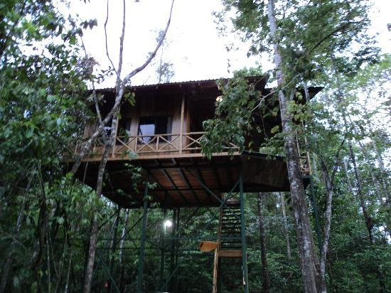 Way up picture of tree houses hotel costa rica la for Tree house for sale costa rica