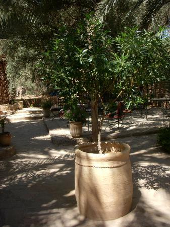 Chez Pauline Ferme d'hotes : Jardin ombragé