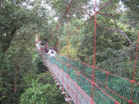 Mountain Trails Tours & Travel: Canopy BRL