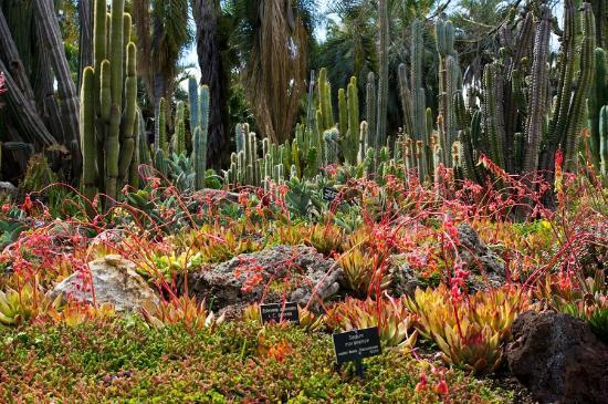 Bon The Huntington Library, Art Collections And Botanical Gardens: Desert Garden