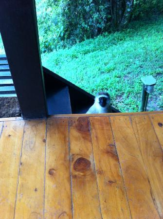 Sekenani Camp: A visitor whilst sitting on the balcony