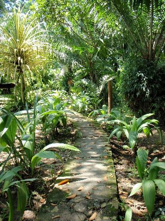 Hotel La Costa de Papito: Jungle path to our bungalow