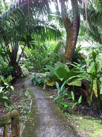 Hotel La Costa de Papito: Jungle path from our bungalow to the bar