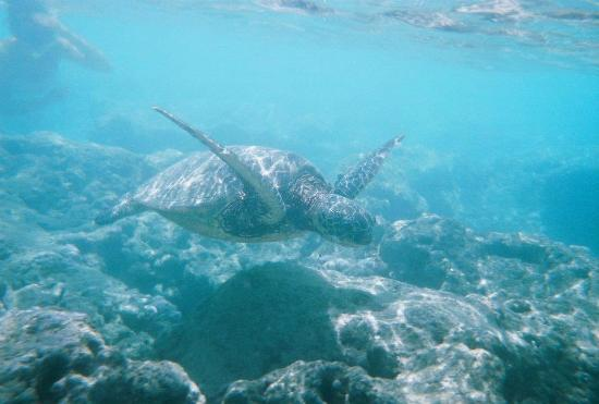 Oahu Snorkeling Tours Tripadvisor