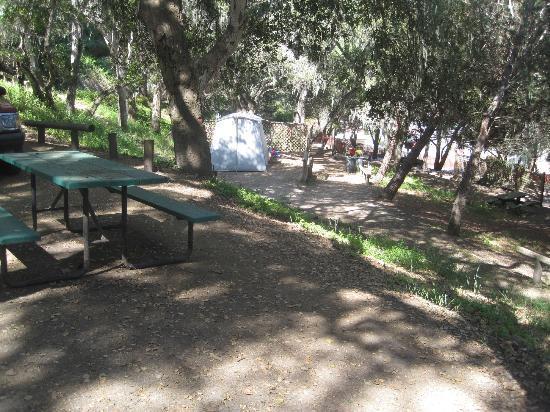 Saddle Mountain RV Park : Tent sites