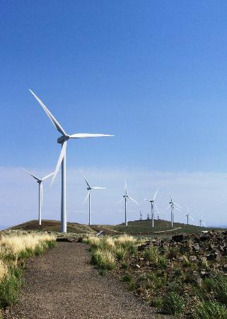 Wild Horse Renewable Energy Center: Some of the many turbines