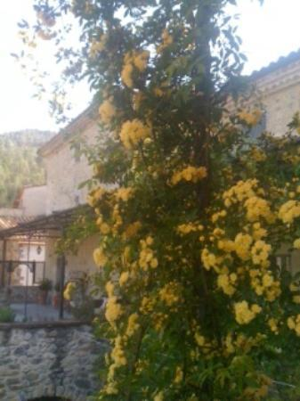 Torre Laurentii Hotel and Restaurant: Yellow roses outside my room