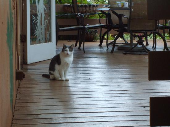 Ocean Breeze Hideaway: Resident Cat, Coconut. (He's not allowed in guest rooms.)