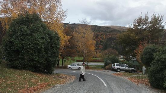 Arrowtown Viking Lodge Motel : Many great short walks through Autumn settings