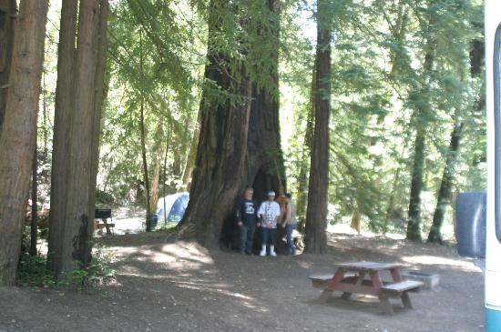 Redwoods River Resort & Campground照片
