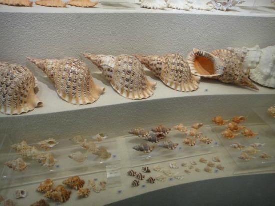 Bangkok Seashell Museum: shells