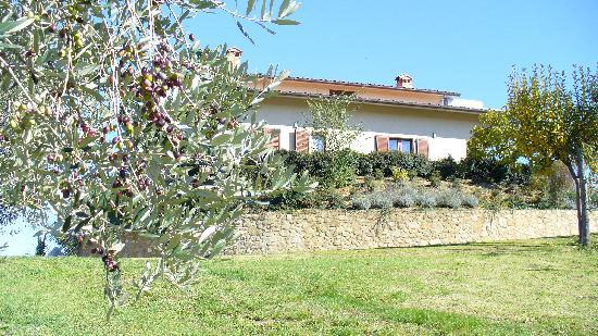 Agriturismo Val della Pieve: gli olivi attorno alla casa
