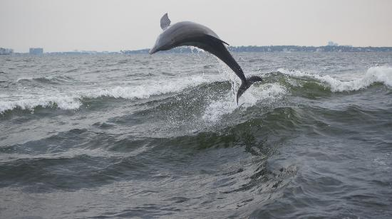 Dolphin Cruise aboard the Cold Mil Fleet: Big air