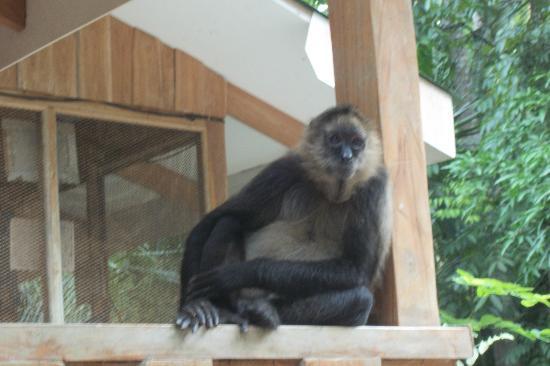 Curu National Wildlife Refuge: Monkey hanging out