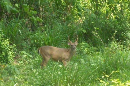 Curu National Wildlife Refuge: a deer scene on horse ride