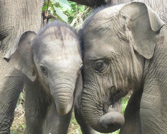 Sayaboury, Лаос: Baby love
